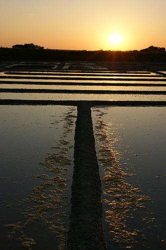 Les marais salants de Guérande au coucher du soleil, par Michelle